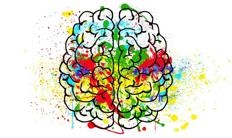 La plasticité cérébrale du cerveau dans l'apprentissage des langues